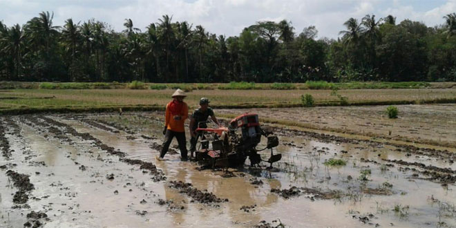 Babinsa Bumirejo Lendah Kulon Progo Bantu Petani Mengolah Lahan